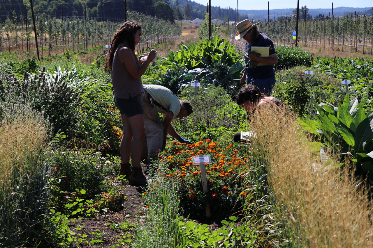 Farmers working in Skeeter's medicinal herb garden.